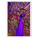 Peacock of a million colors greeting card