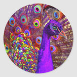 Peacock of a million colors round stickers