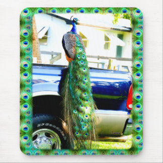 Peacock on a Pickup Mousepad
