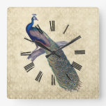 Peacock on Elegant Ivory Damask Square Wallclocks