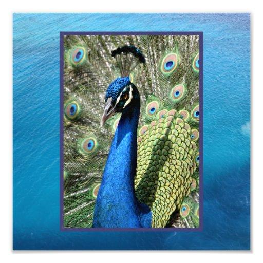 Peacock on Ocean Background Photo