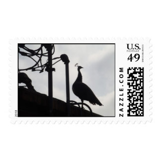 Peacock on the rooftop postage stamp