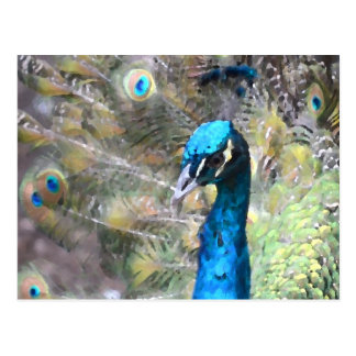 peacock painting look left side head postcard