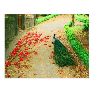 Peacock path near a castle in northern Portugal. Postcard