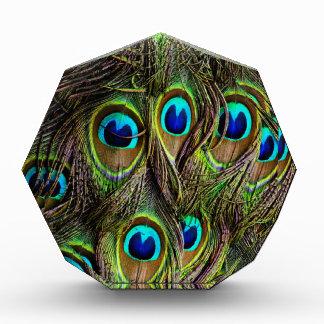 peacock pattern acrylic award