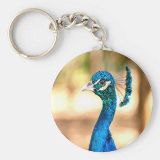 Peacock Pavo cristatus look forward to love Keychain