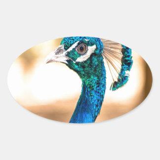Peacock Pavo cristatus look forward to love Oval Sticker