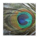 Peacock Peafowl Feathers Animal Tile