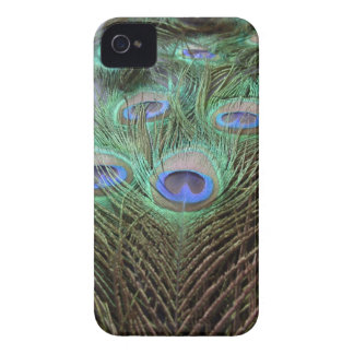 Peacock / Peafowl Feathers Color Photograph iPhone 4 Case-Mate Cases