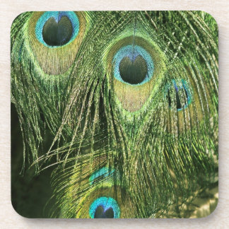 Peacock/Peafowl Feathers Set of Six Coasters