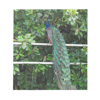 Peacock Perched In Magnolias Note Pad