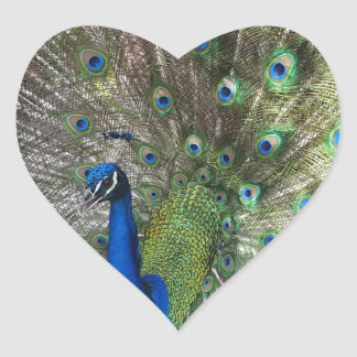 Peacock Perfection Heart Sticker