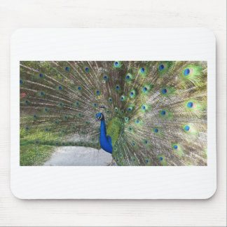 Peacock Perfection Mouse Pad