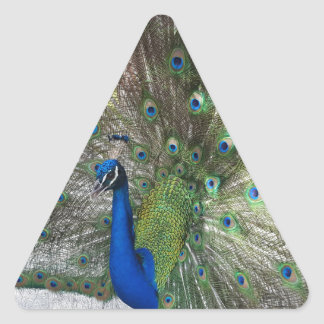 Peacock Perfection Triangle Sticker