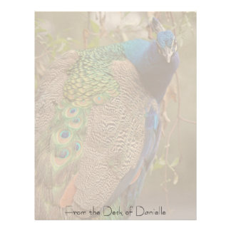 Peacock Personalized Letterhead