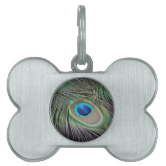 Peacock Pet ID Tag