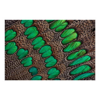 Peacock Pheasant Feather Abstract Poster