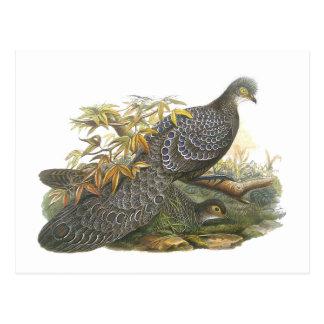 Peacock Pheasant Post Cards