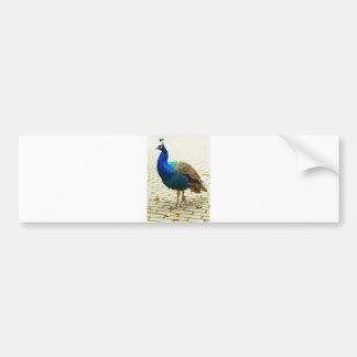 Peacock Photo Bumper Sticker