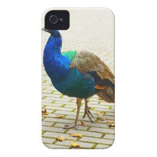 Peacock Photo Case-Mate iPhone 4 Case