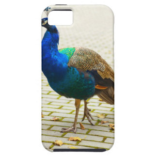 Peacock Photo iPhone SE/5/5s Case
