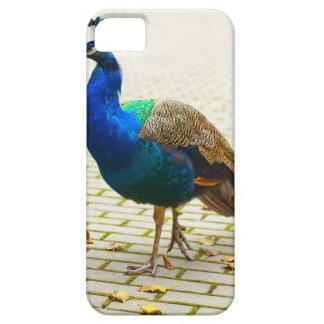 Peacock Photo iPhone SE/5/5s Case
