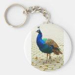 Peacock Photo Keychains