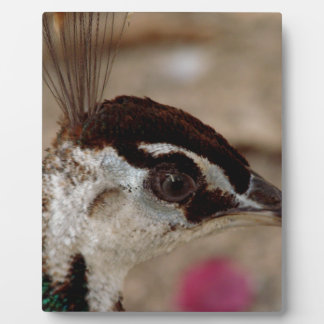 Peacock Photo Plaques