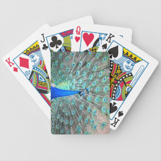 Peacock photo playing cards deck