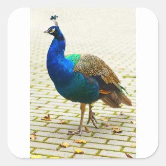 Peacock Photo Square Sticker