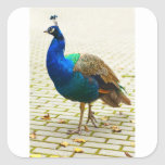 Peacock Photo Square Stickers