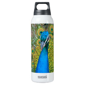 Peacock  Photo with Colorful Tail Feathers 16 Oz Insulated SIGG Thermos Water Bottle