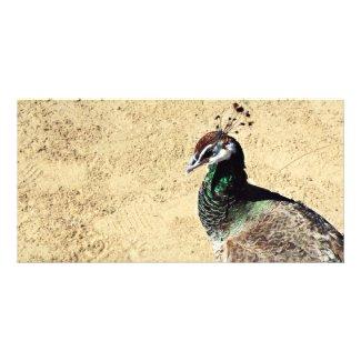 Peacock photocard