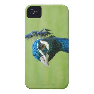 Peacock Photograph iPhone 4 Case