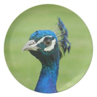 Peacock Photograph Dinner Plate