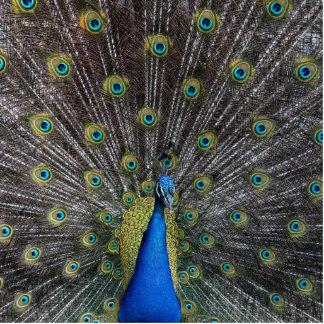 peacock photo sculpture button