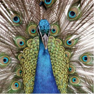 Peacock Standing Photo Sculpture