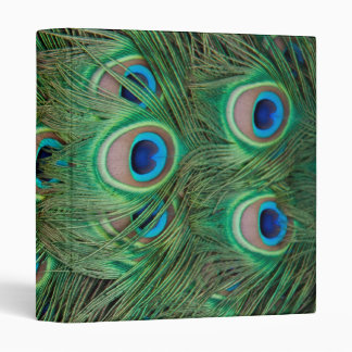 Peacock plumage 3 ring binder