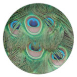 Peacock plumage dinner plates
