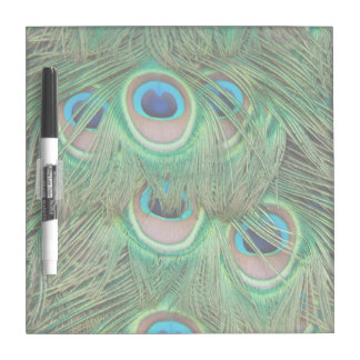 Peacock plumage Dry-Erase boards