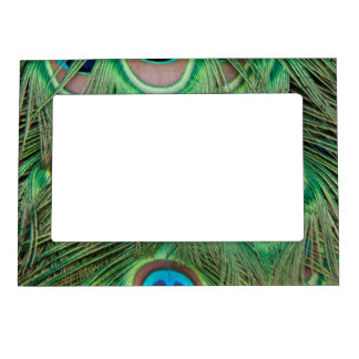 Peacock plumage magnetic picture frame