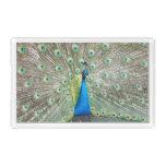 Peacock Plumage Photo Acrylic Tray