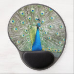 "Peacock Plumage Photo Gel Mouse Pad<br><div class=""desc"">Hard surface,  oval mouse pad with gel pad wrist support to assist in your computer work and features a photo image of a blue Peacock with colorful fantail plumage. To see other products offered in the store,  click on the Northwestphotos store link.</div>"