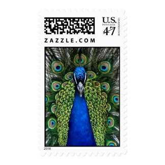 Peacock plumage postage stamps plume feathers