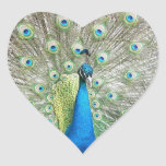 Peacock Plumage Stickers