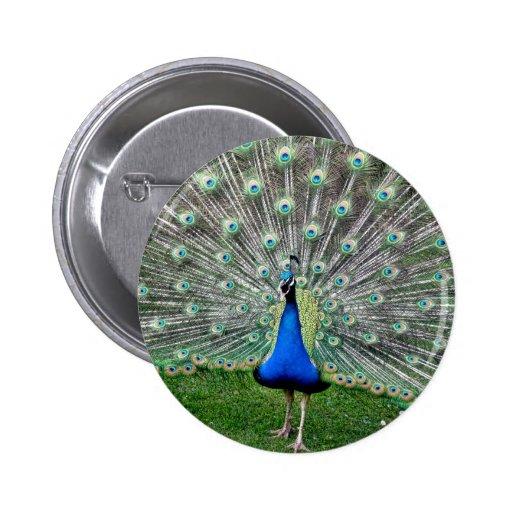 Peacock Plume Button
