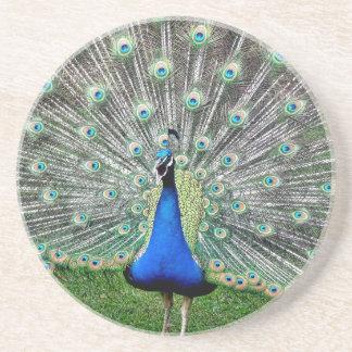 Peacock Plume Coaster
