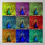 peacock pop art posters