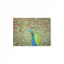 Peacock Post-it Notes