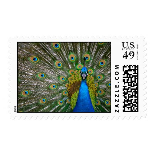 Peacock Postage Stamp